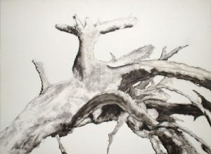 El arbol seco (dried tree) (I) | Guillermo Coll