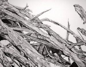 El arbol seco (dried tree) (V) | Guillermo Coll