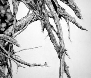 Enramada | Guillermo Coll
