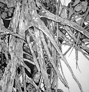 El arbol seco (dried tree) (VII) | Guillermo Coll
