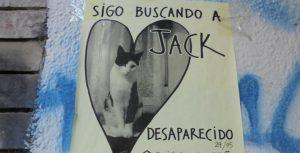 El gato Jack | Guillermo Coll