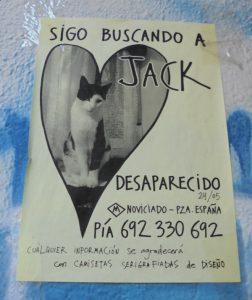El gato Jack