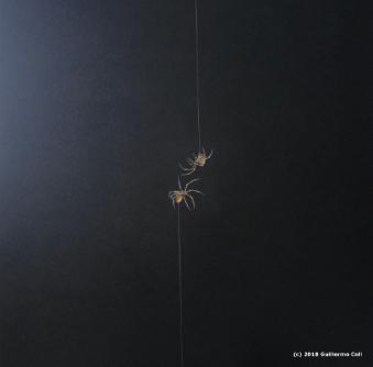 Spiders & Birds