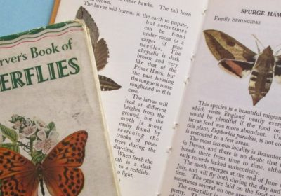 Books on butterflies