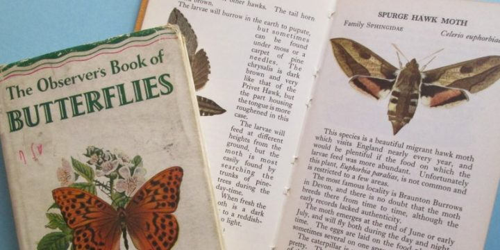 Books on butterflies