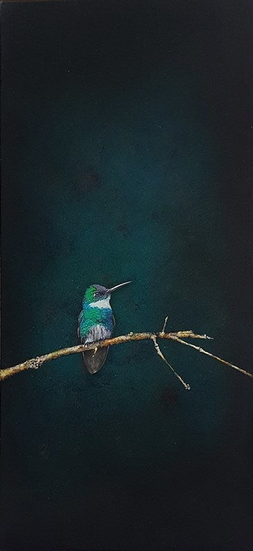 Bird picture | Guillermos Coll