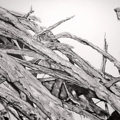 El arbol seco (dried tree) (V)   Guillermo Coll
