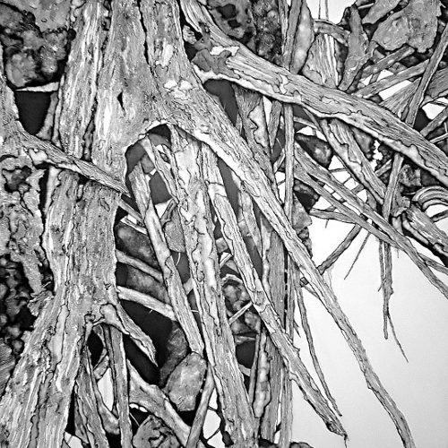 El arbol seco (dried tree) (VII)   Guillermo Coll