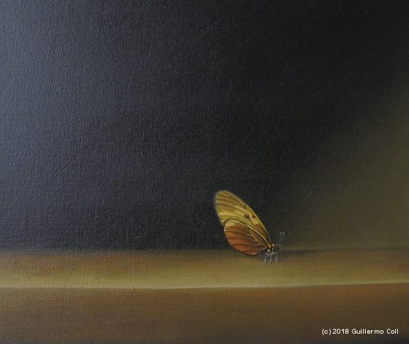Butterflyes | Guillermo Coll
