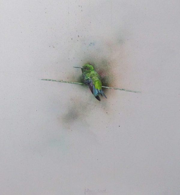 Bird picture | Guillermos Coll
